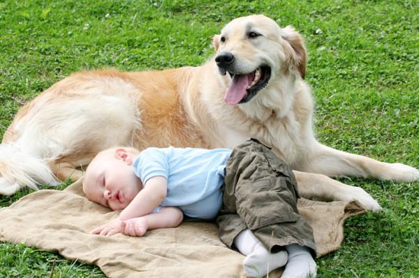 Роль домашних животных в жизни детей